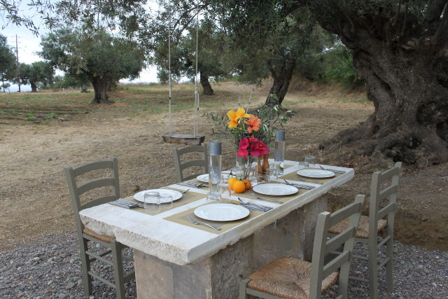 Breakfast_under_the_old_aged_olive_tree