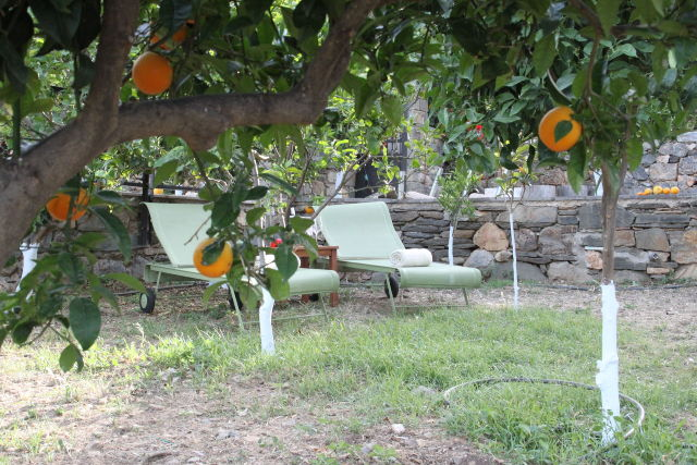 Sun_beds_among_the_fragrant_orange_trees
